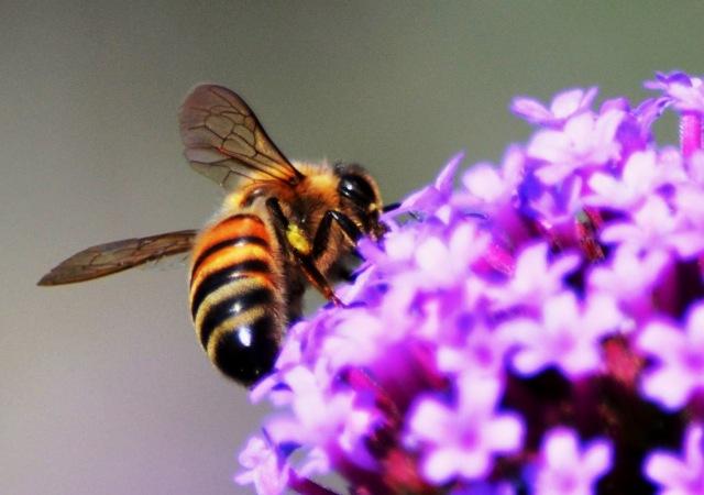 Bees @ The Dawes Arboretum
