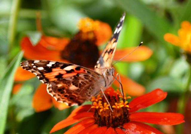Beautiful Autumn Butterfly