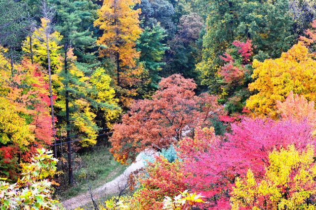 Autumn @ Mohican State Forest