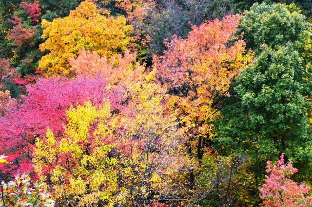 Mohican State Park ~ Fall Colors