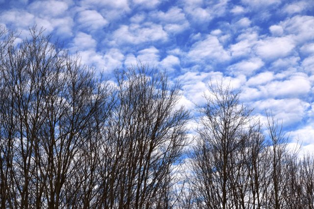 Powderpuff Sky