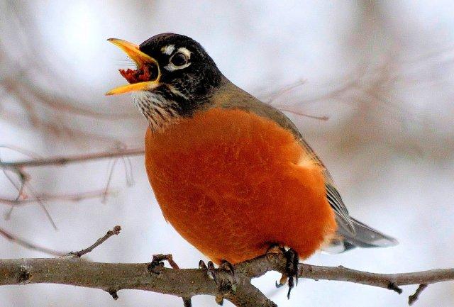 Robin's Gotta Eat!