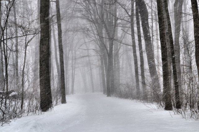 Solitary, Snowy, Trail