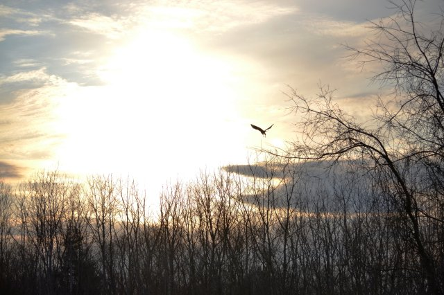 Hawk Takes Flight at Sundown