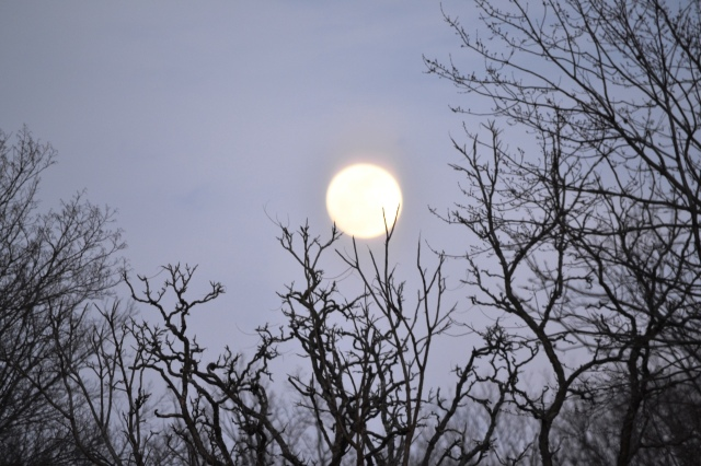 Moon Suspended by Trees