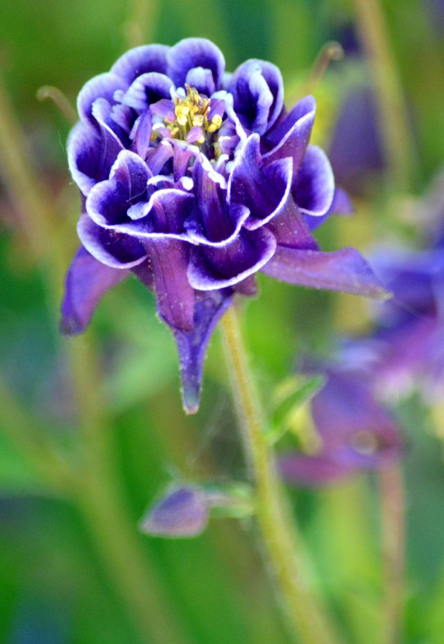 Vibrant Flower of Blue & Purple