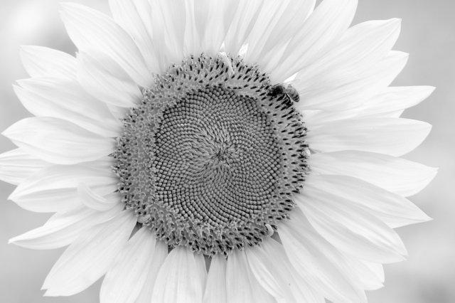 Dawes 2014.08.03 248 - Copy - Copy