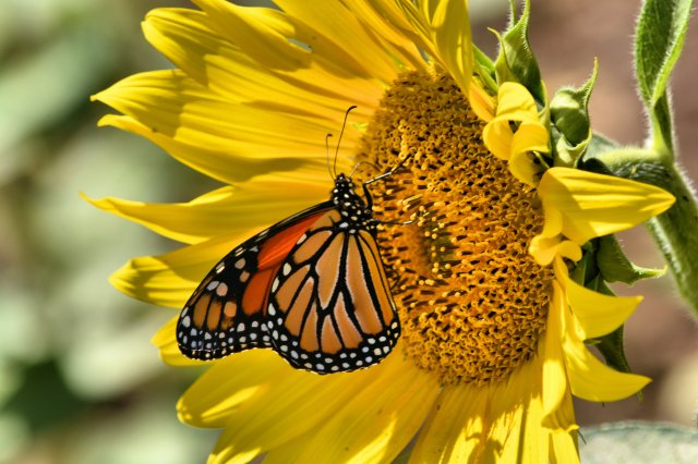 Yellow Springs 2014.09.13 323