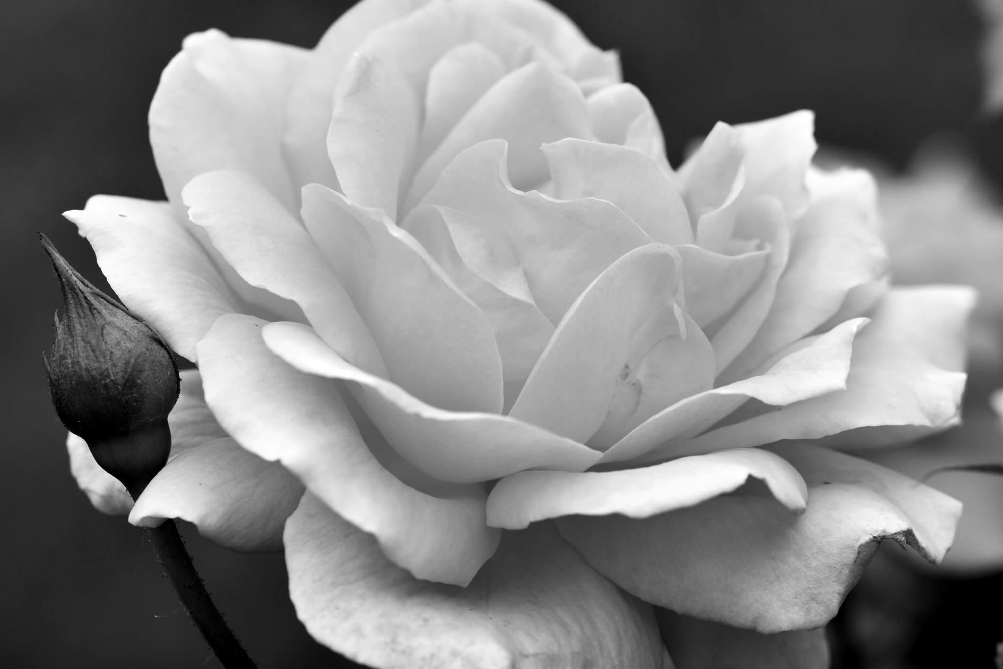 Black And White Photography Tonyparsleyohionature Page 2